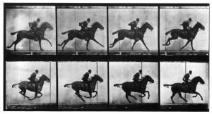 eadweard-muybridge-horse