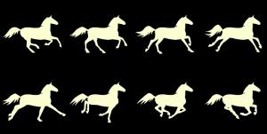 horserunning8frame-reference2